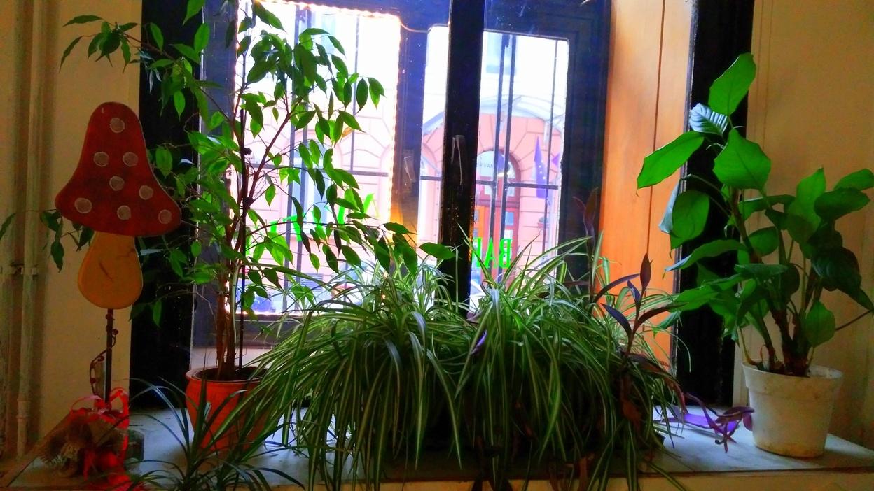 pubtourist_greenbar_plants
