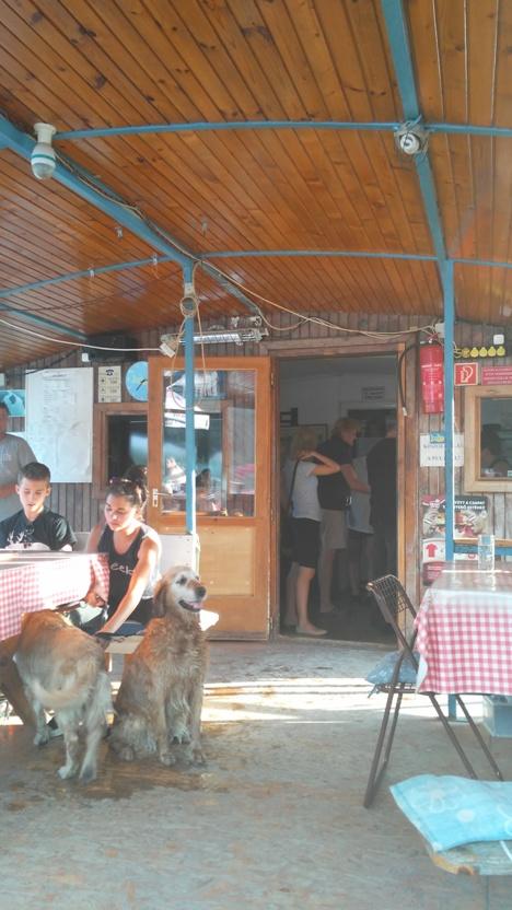 pubtourist_ebihal_dogs