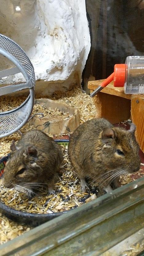 The pets of Korhely in Pécs - Pubtourist